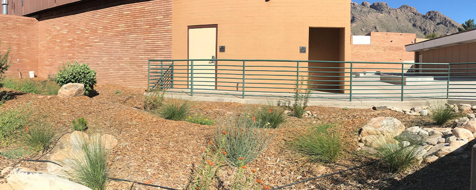 Photo of a school rain garden